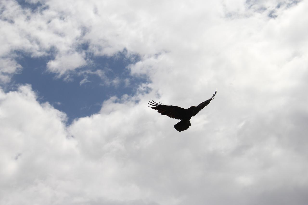 crow-434743_1280