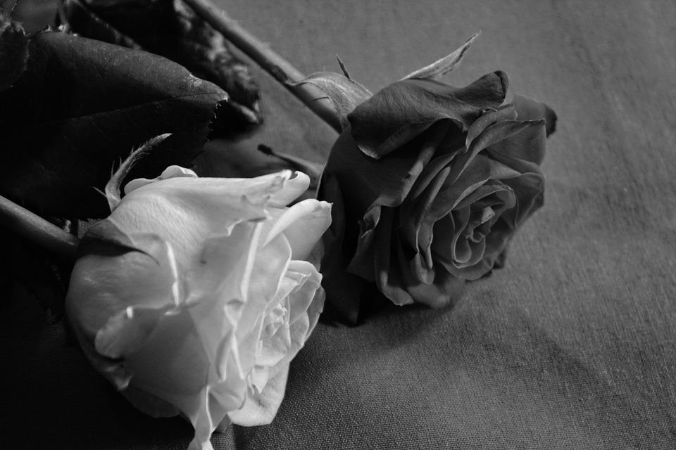 rose-90821_960_720